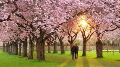 تصویر از طبیعت و آرامش